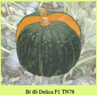Hạt giống BÍ ĐỎ DELICA F1 TN78