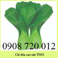 Hạt giống CẢI THÌ CAO SẢN TN03