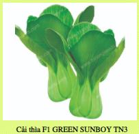 Hạt giống CẢI THÌ F1 GREEN SUNBOY TN3