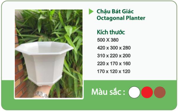 Chậu nhựa trồng cây CHẬU BÁT GIÁC