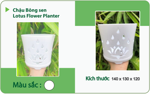 Chậu nhựa trồng cây CHẬU BÔNG MAI