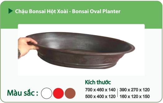 Chậu nhựa trồng cây CHẬU BONSAI HỘT XOÀI