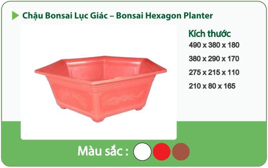 Chậu nhựa trồng cây CHẬU BONSAI LỤC GIÁC