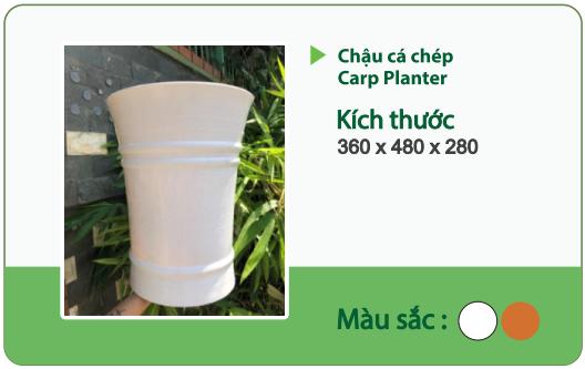 Chậu nhựa trồng cây CHẬU CÁ CHÉP