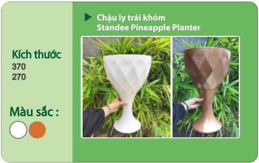 Chậu nhựa trồng cây CHẬU LY TRÁI KHÓM