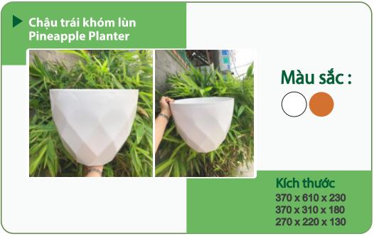 Chậu nhựa trồng cây CHẬU TRÁI KHÓM LÙN