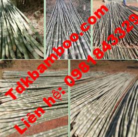 bamboo9 1
